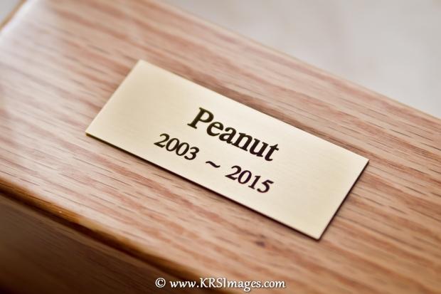 Peanut Plaque 012 E web